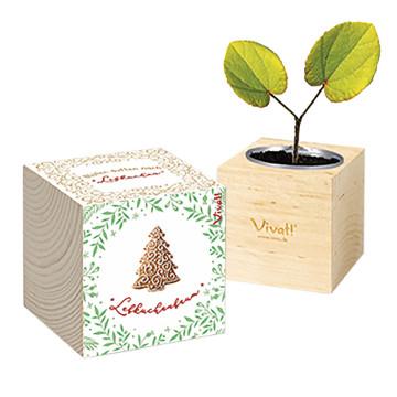 Pflanzenwürfel »Lebkuchenbaum«